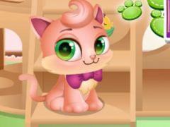 Kitty House Builder